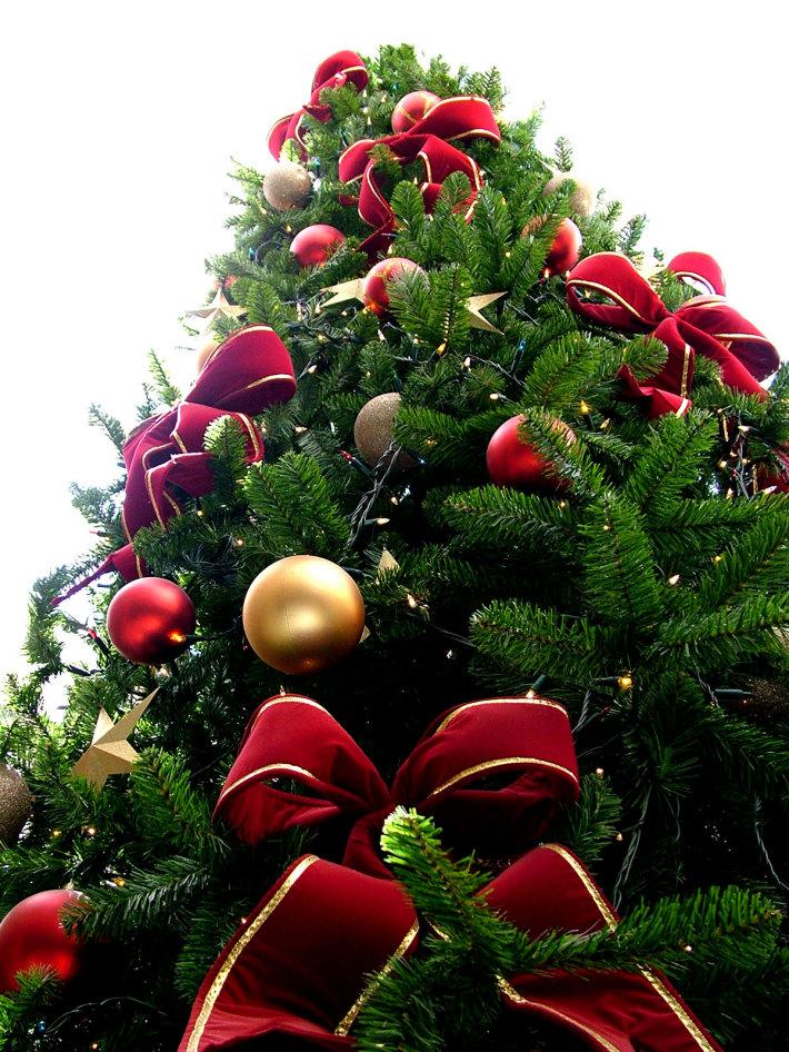 foto: silvana-pontodepartida.blogspot.com