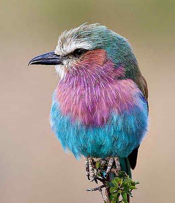 Păsări colorate