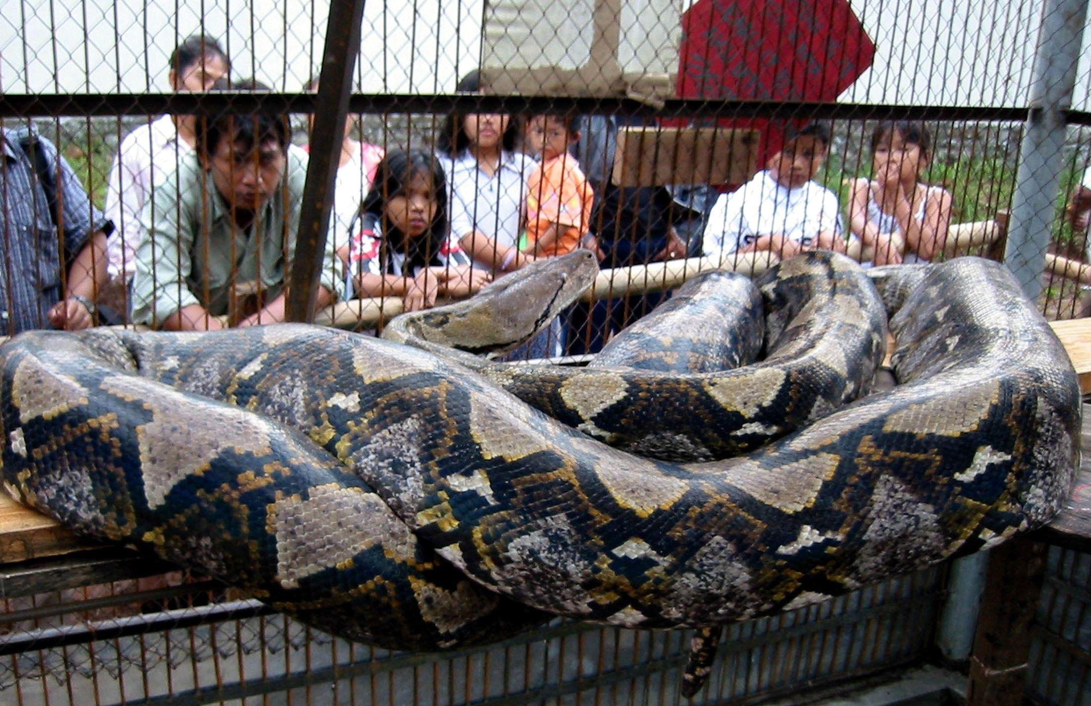 Sarpe, Foto: foxnews.com