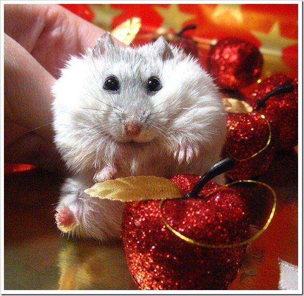 Hamster, Foto: reallycutepets.wordpress.com