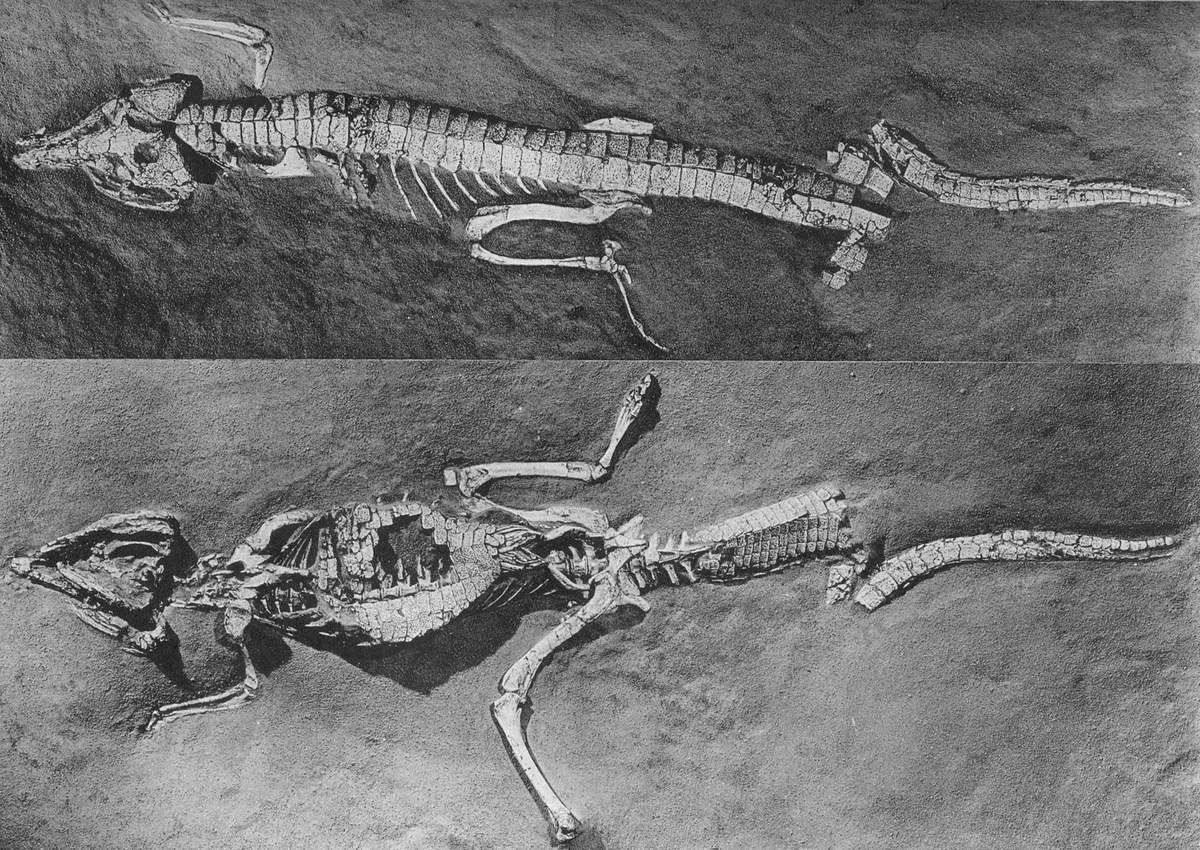 Orthosuchus, Foto: animalreader.ru