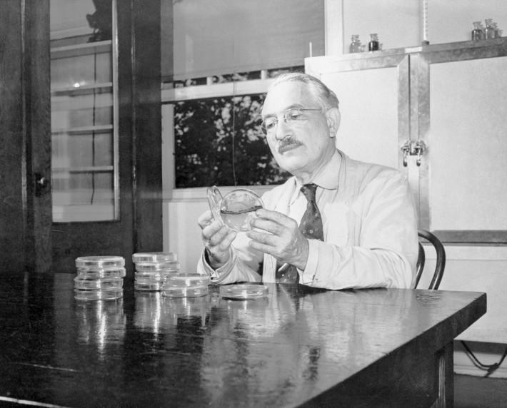 Biochimistul Selman A. Waksman, Foto: blogs.howstuffworks.com