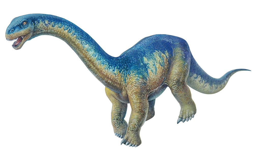Dautosaurus, Foto: australiangeographic.com.au