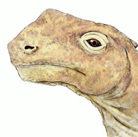 Dinozaurul Abrosaurus 1
