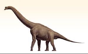 Dinozaurul Datousaurus