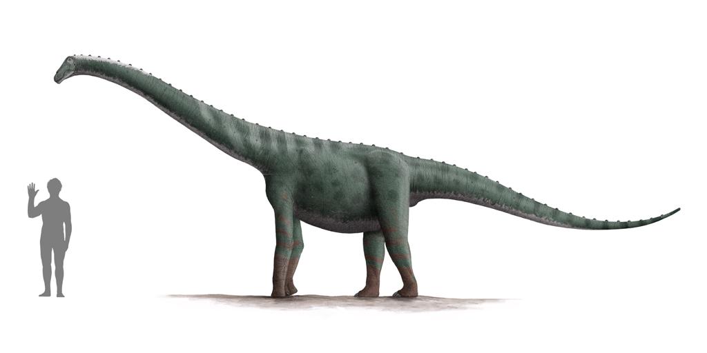 Lapparentosaurus, Foto: blogevolved.blogspot.com