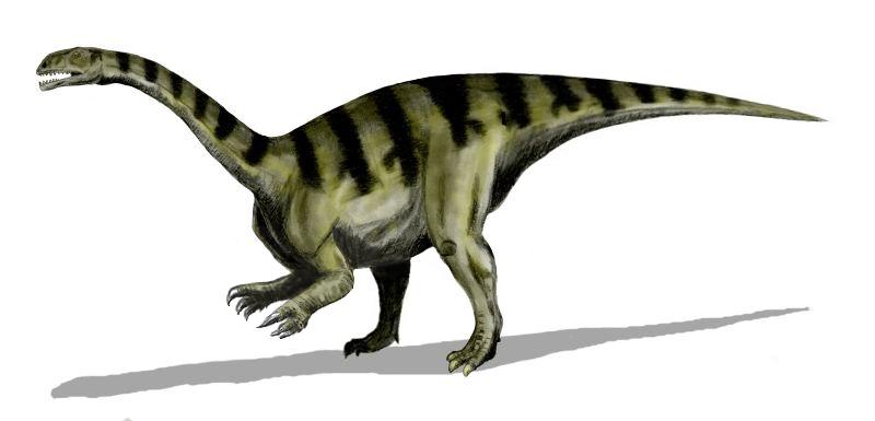 Sellosaurus, Foto: upcscavenger.com