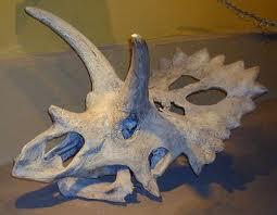 Craniul dinozaurul Arrhinoceratops
