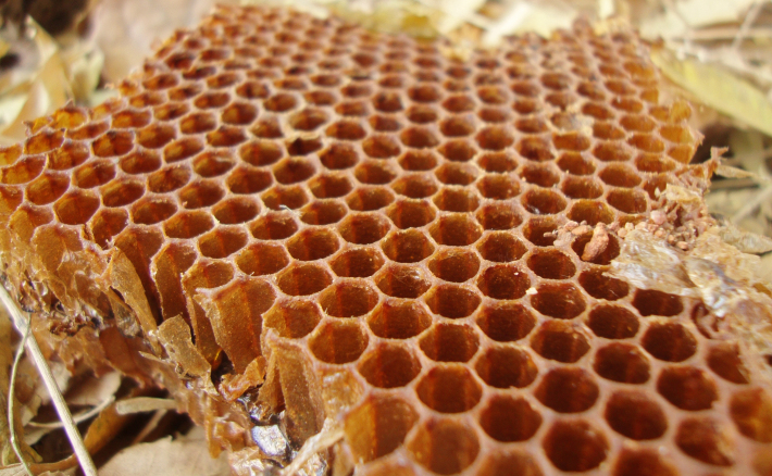Fagure de miere, Foto: commons.wikimedia.org