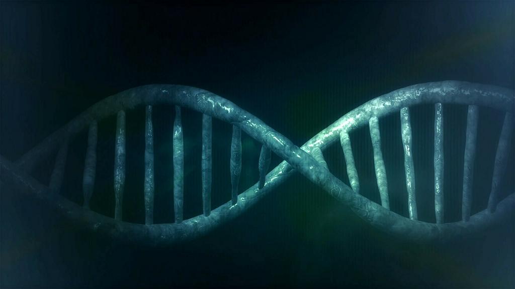 ADN 2 laturi