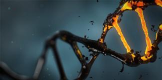 ADN Molecule