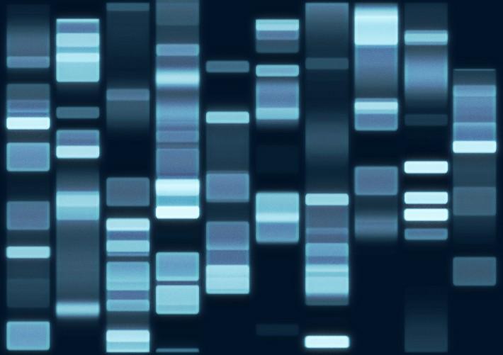 Amprenta genetica, Foto: leahmorrigan.wordpress.com