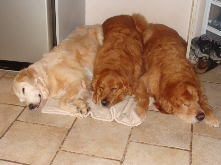 Catei dormind, Foto: myjin0103.wordpress.com