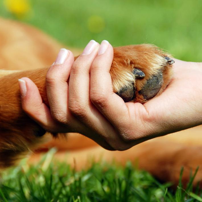 Prietenia dintre om si animalul de companie, Foto: femside.com