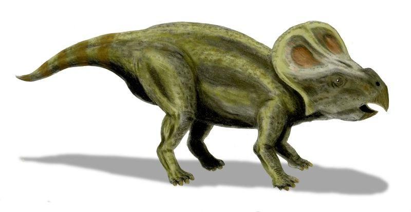 Protoceratops, Foto: regolinigalassi.wordpress.com