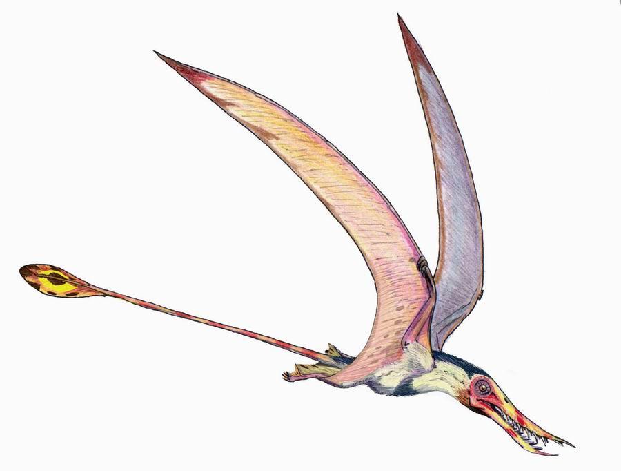 Rhamphorhynchus, Foto: urzeitwelt.wordpress.com
