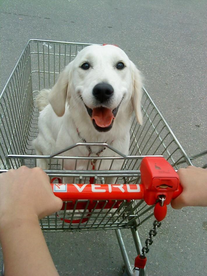Un caine la cumparaturi, Foto: supercuter.com