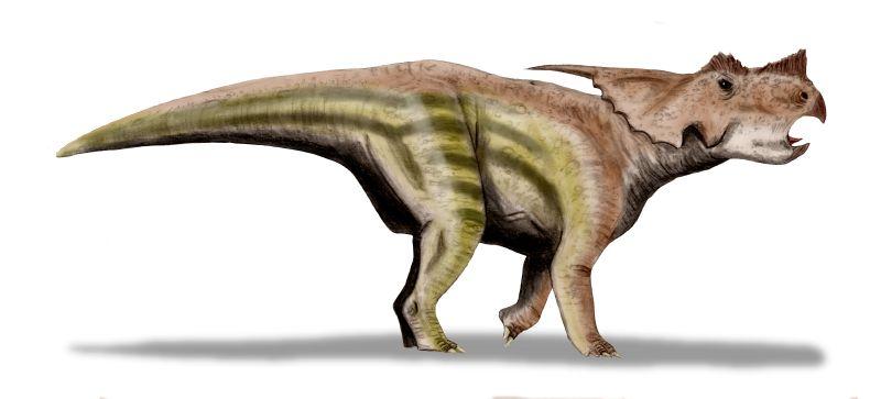 Achelousaurus, Foto: dinooftheweek.blogspot.com
