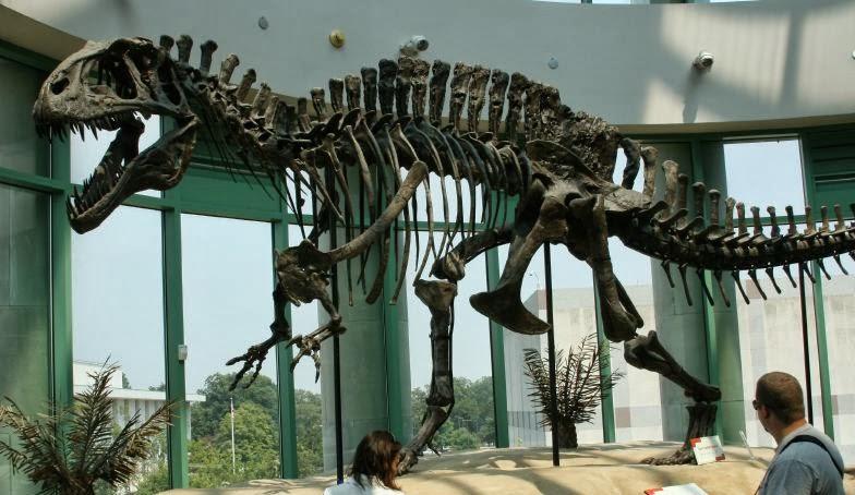 Acrocanthosaurus, Foto: lucertoleterribili.blogspot.com