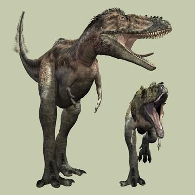 Dinozaurul Alioramus, Foto: raptorex.blog.cz