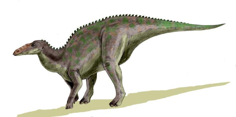 Anatotitan, Foto: juanplosoto.blogspot.com