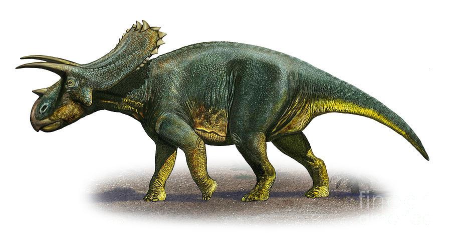 Anchiceratops ornatus, Foto: dinosaurpivoting.boards.net