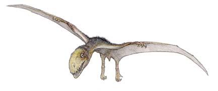 Anurognathus, cel mai mic dinozaur zburator, Foto: decomputermeester.nl