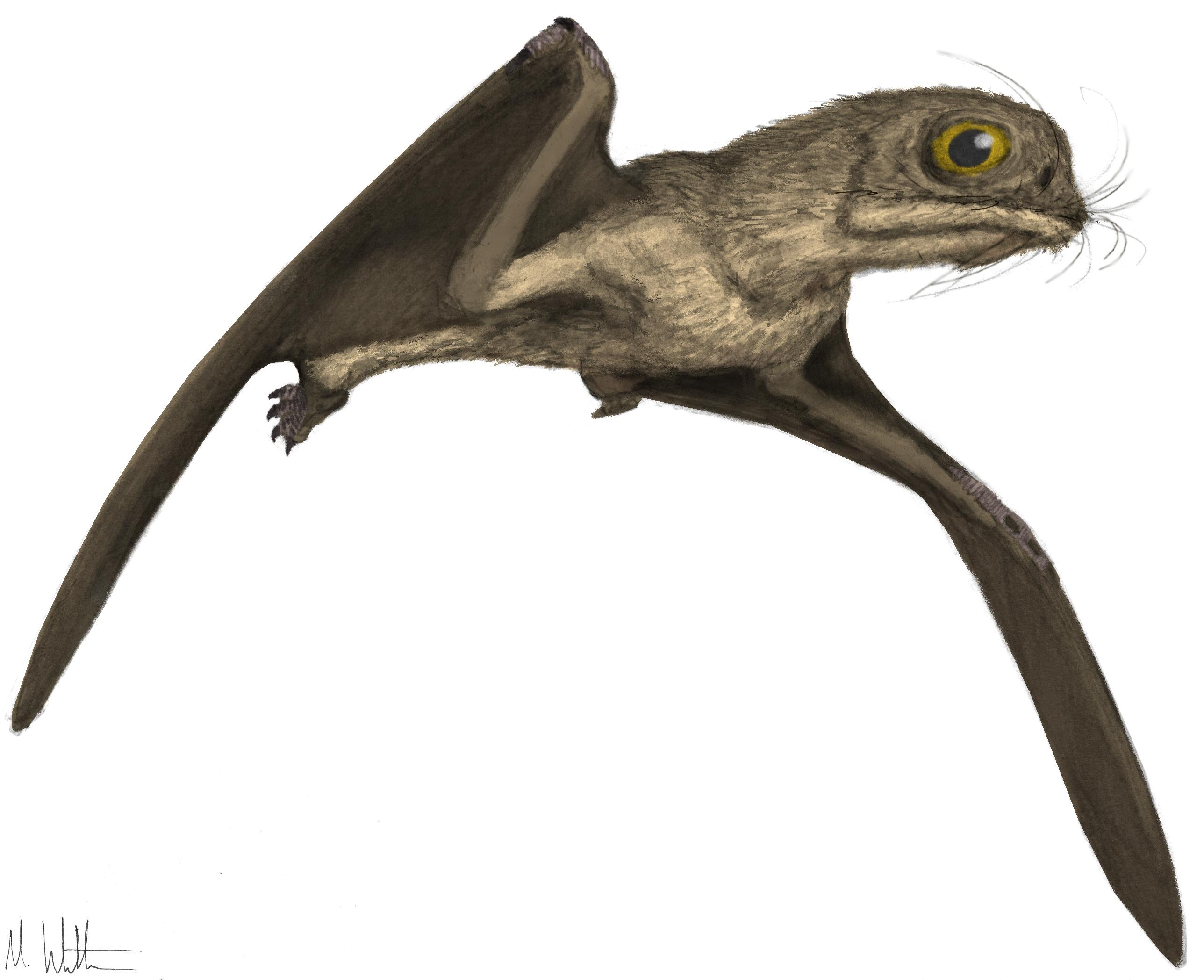 Anurognathus, Foto: fondoshd.mx