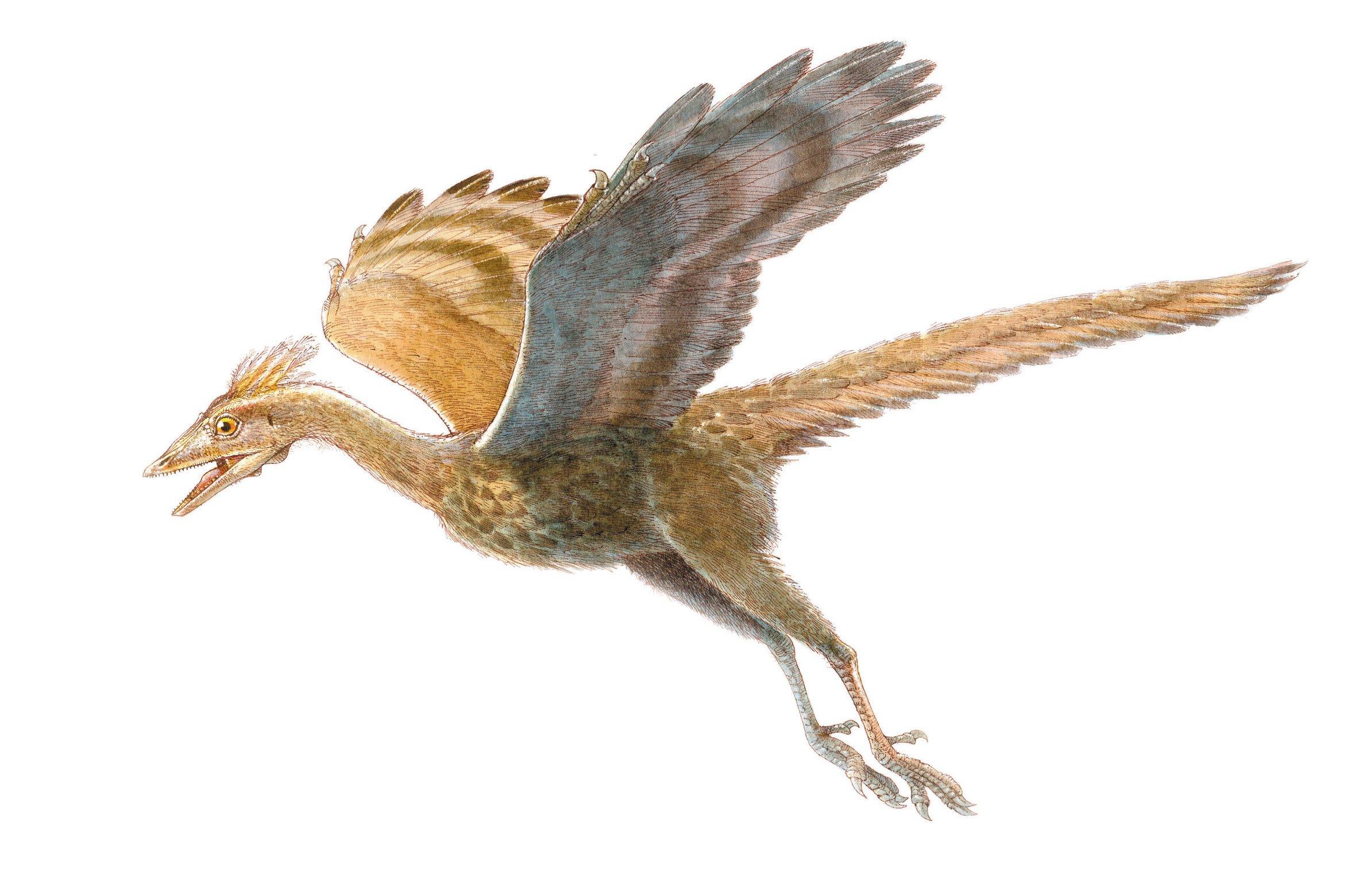 Archaeopteryx, Foto: lokissciphile.wordpress.com