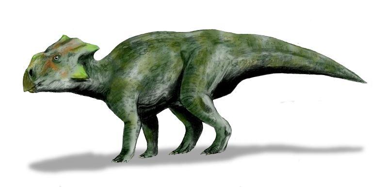 Bagaceratops, Foto: chasmosaurs.blogspot.com