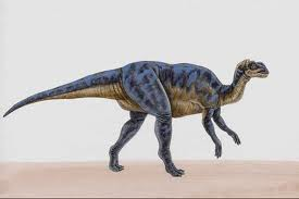Brachylophosaurus canadensis 1