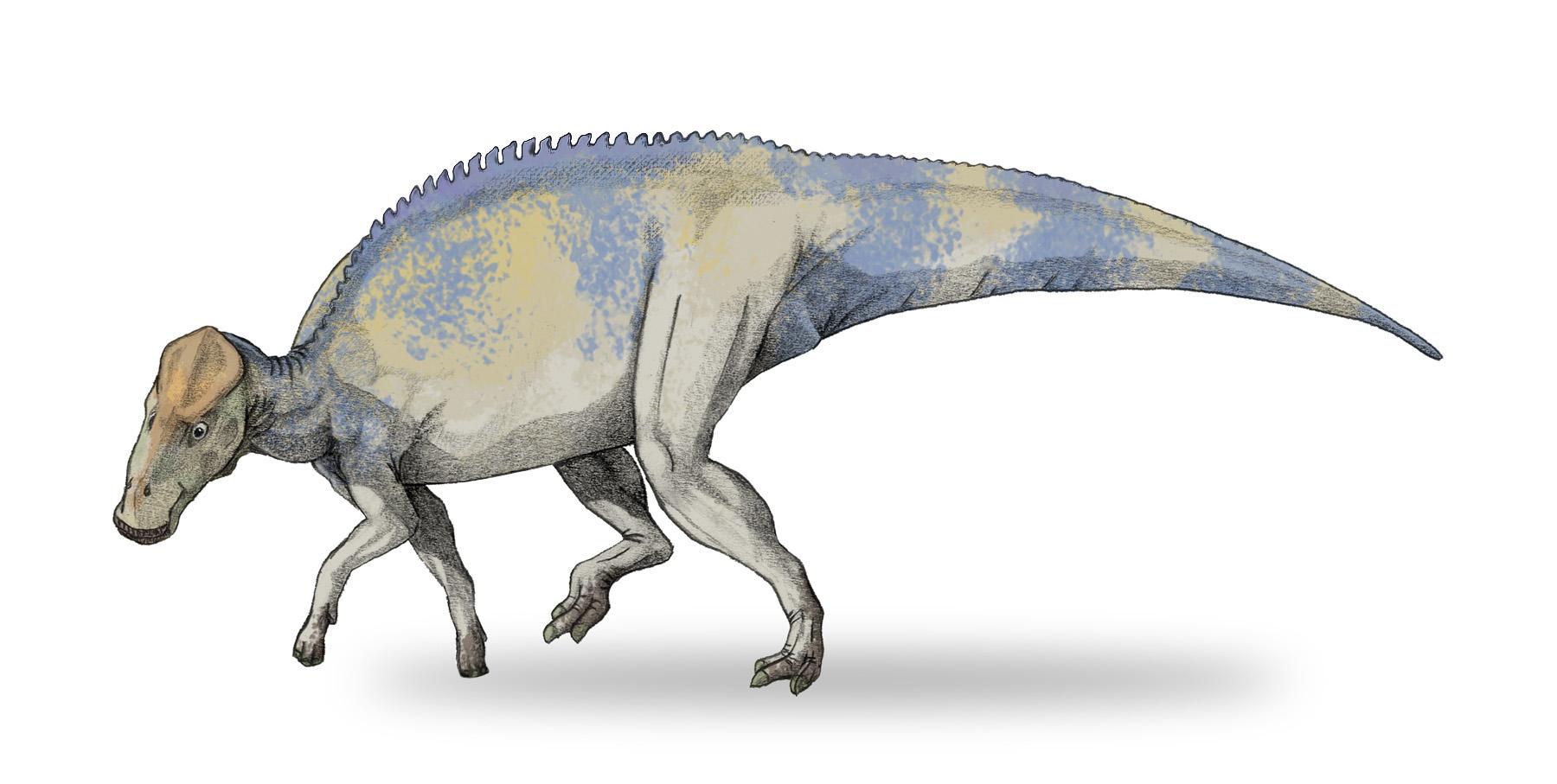 Brachylophosaurus, Foto: officeboots.net