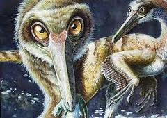Buitreraptor gonzalezorum 2