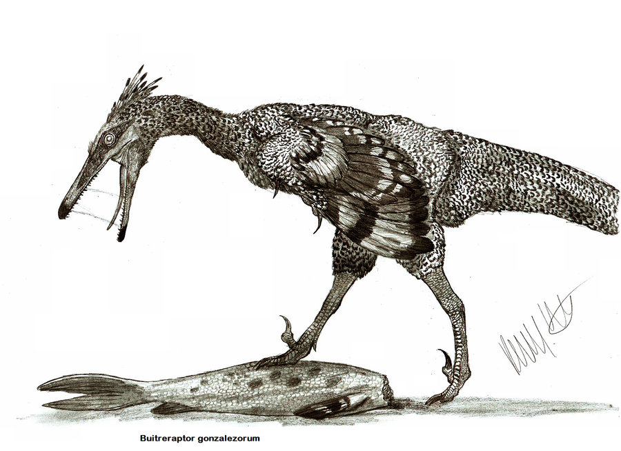 Buitreraptor, Foto: carnivoraforum.com