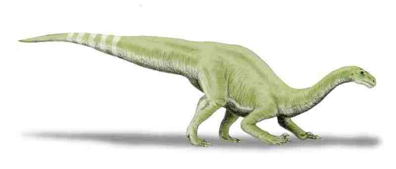 Coloradisaurus, Foto: smashable.in