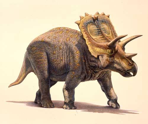 Dinozaurul Anchiceratops, Foto: carnivoraforum.com