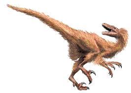 Dromaeosaurus albertensis 1