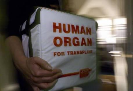 Geanta speciala utilizata pentru transportul organelor, Foto: vimaaliartou.wordpress.com