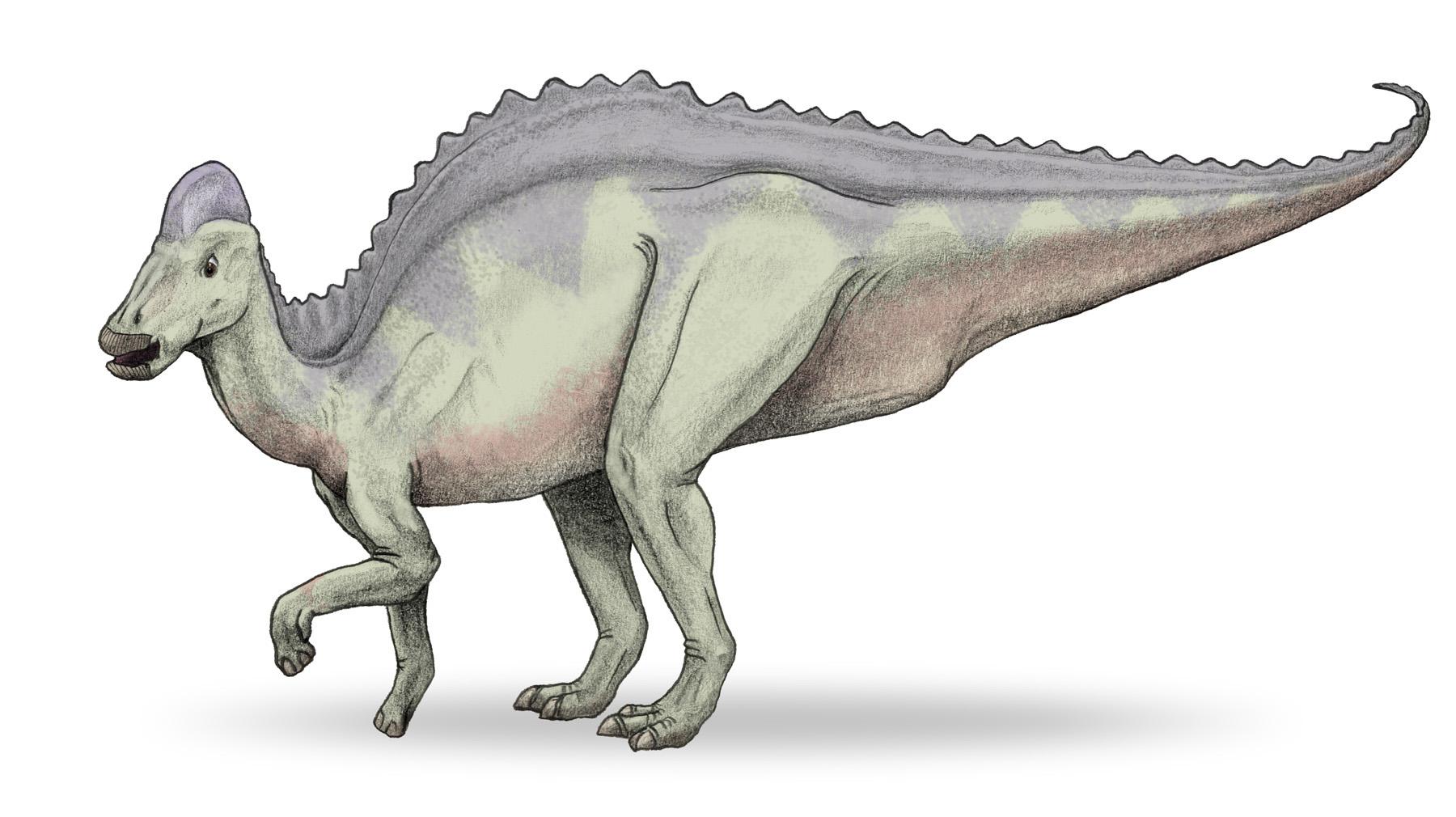 Hypacrosaurus, Foto: dic.academic.ru