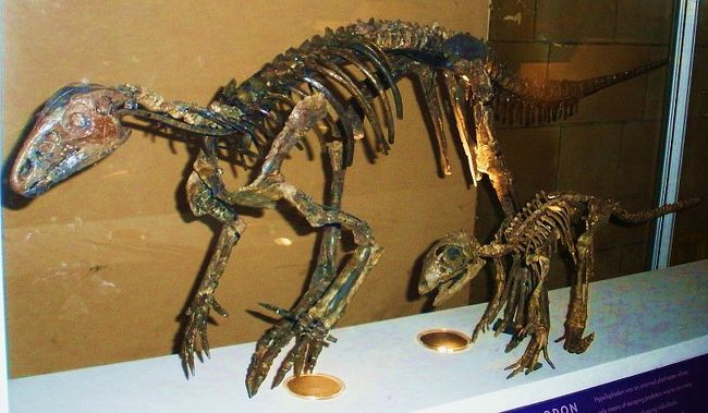 Hypsilophodon, Foto: kbinh.tistory.com