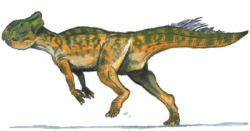 Leptoceratops, Foto: search4dinosaurs.com