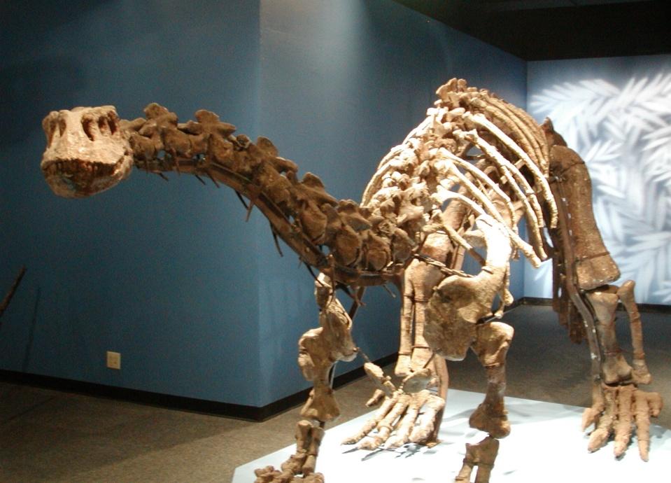 Lufengosaurus, Foto: boombob.ru