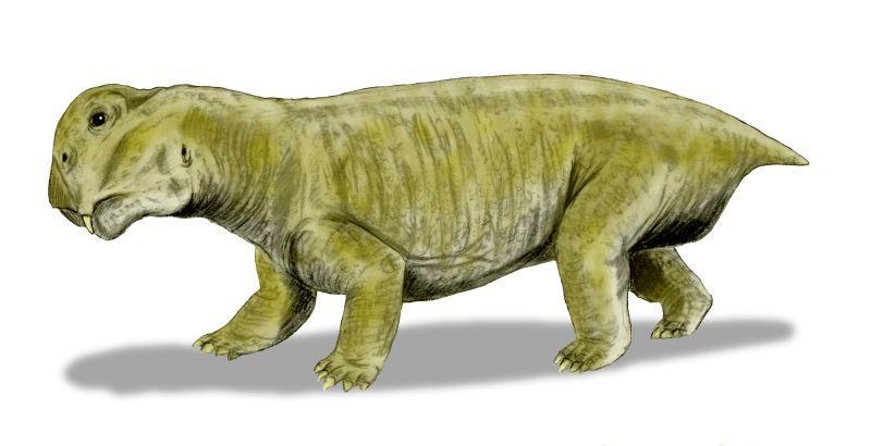 Lystrosaurus, Foto: tc.wangchao.net.cn
