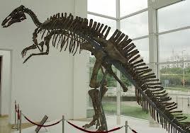 Mandschurosaurus amurensis, Scheletul din Rusia