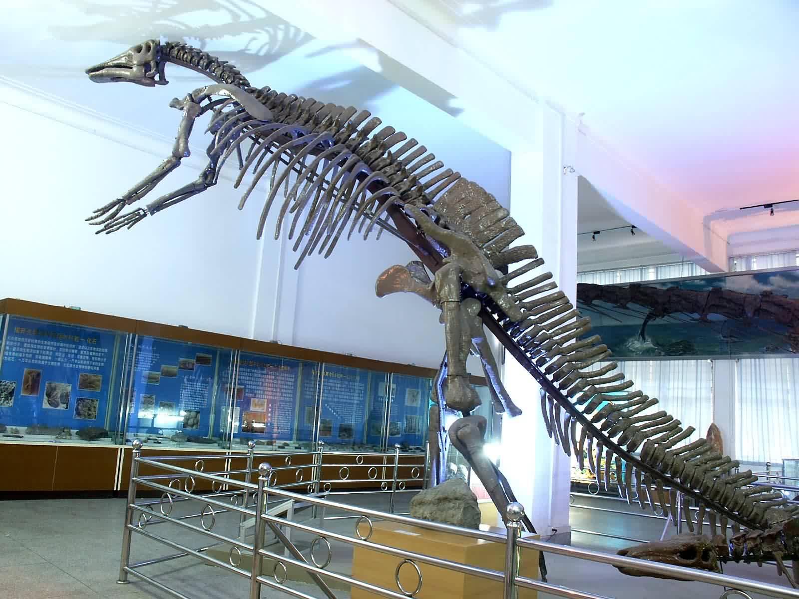Mandschurosaurus, Foto: scires.datatang.com