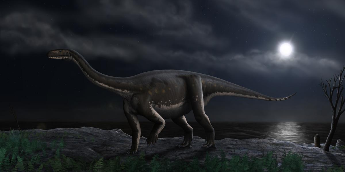Melanosaurus, Foto: dracovenator.wordpress.com