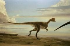 Noasaurus leali 2