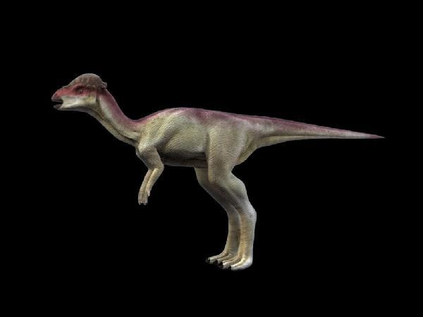 Pachycephalosaurus wyomingensis, Foto: en.ela.mobi