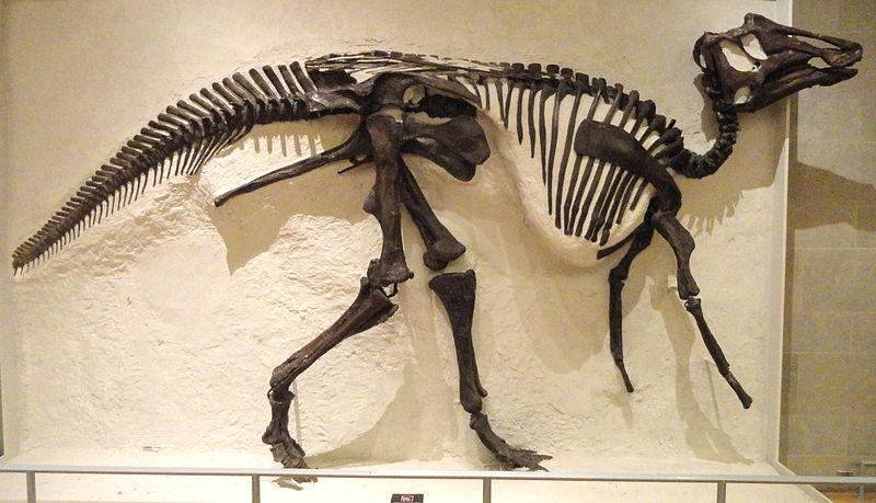 Prosaurolophus, Foto: carnivoraforum.com