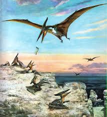 Pteranodon 1